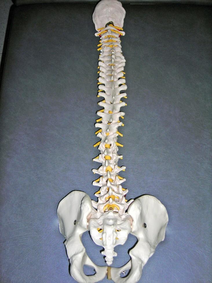 Ból kręgosłupa – poznaj 7 przyczyn